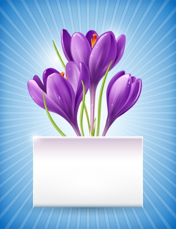 dewdrop: Vector card with spring flowers crocus and banner for text