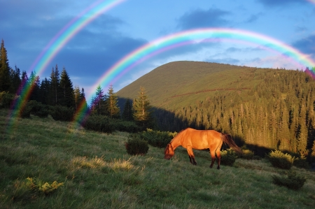 Horse grazing in the mountains and a beautiful rainbow photo