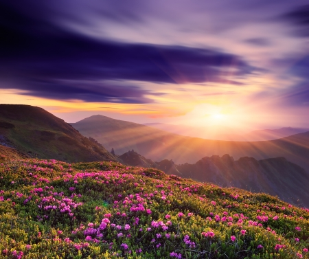 Spring landscape with a beautiful sunset in the mountains and rhododendron flowers Standard-Bild