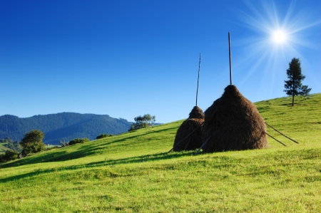 haymaking: Rural landscape with haystacks on the green grass  Bright summer day