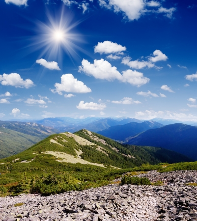Sunny summer landscape in the mountains with alpine pine photo
