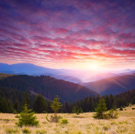 Mountain landscape with a beautiful sunrise and coniferous forest