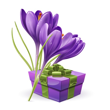 Crocus flowers with a gift   Vector