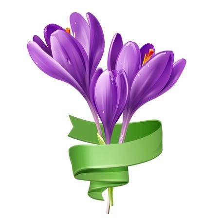 식물상: 봄 꽃의 그림 흰색 배경에 녹색 리본 크로커스