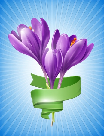 Illustration of spring flowers crocus with green ribbon Vector