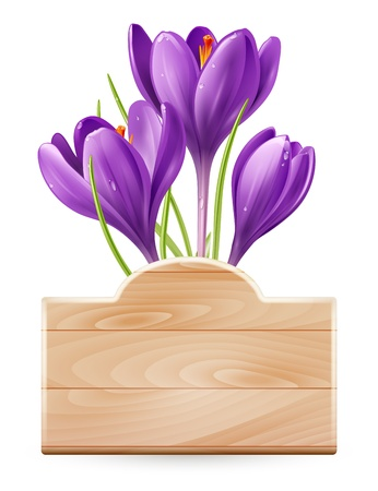 early spring: Wooden sign and spring flowers crocus