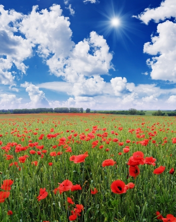 Summer Landscape with a field of red poppies Stock Photo