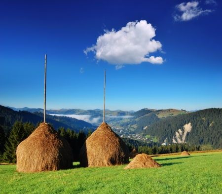 backwoods: Summer landscape with haystacks in mountain village