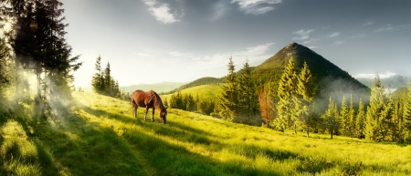Beautiful view of the mountains on a summer morning. A horse in a pasture in the mountains. photo