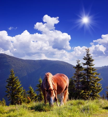Horse in the mountains photo