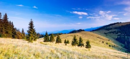 Berglandschaft am Morgen mit Nadelwald