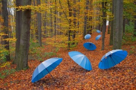 Blue umbrellas on a track in the wood photo
