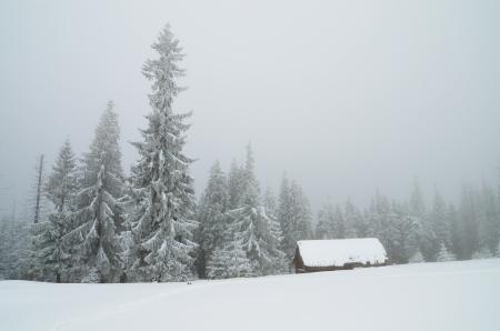 Winter landscape in mountains overcast day  Carpathians, Ukraine photo