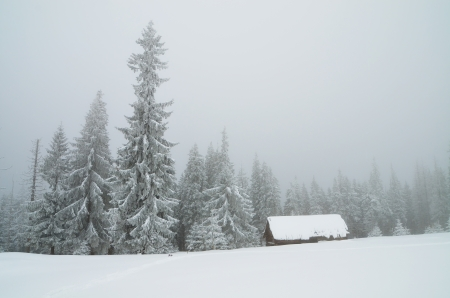 christmas scenery: Winter landscape in mountains overcast day  Carpathians, Ukraine Stock Photo