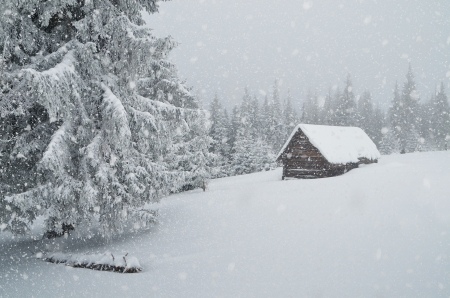 Winter landscape with blowing snow and a hut in the forest  Ukraine, Carpathian Mountains