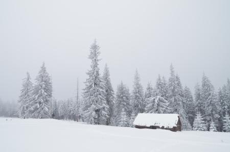 Winter landscape with a hut in a mountain valley  Ukraine, Carpathians photo