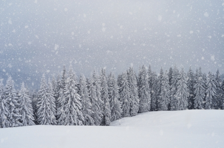 Landscape with mountain and forest in winter snowstorm  Archivio Fotografico