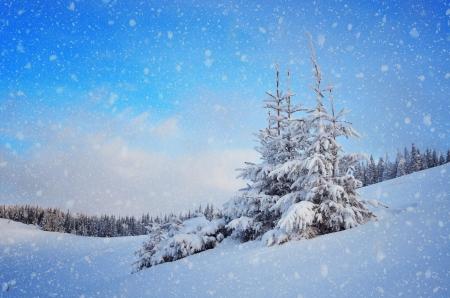 Snow-covered fir tree in a mountain valley  Christmas landscape