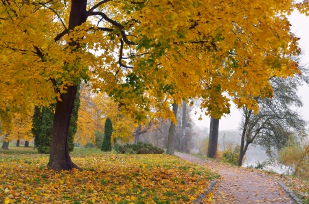 Autumn landscape in park with yellow maple trees photo