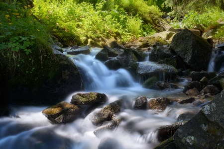 Beautiful mountain river with cascades of stones and green plants in the forest photo