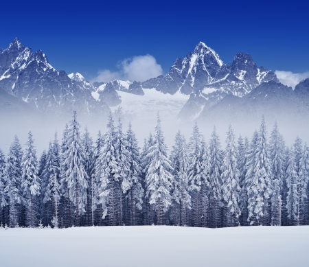 Winter landscape overcast day with fir trees in the mountains Archivio Fotografico