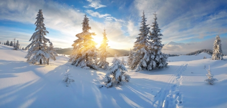Frosty morning in the mountains  Panorama of winter mountains  Ukraine, Carpathians