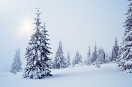 winter wonderland: Winter landscape with fog in a mountain forest
