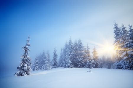 Winter landscape with fog in a mountain forest  Evening with the warm rays of the sun