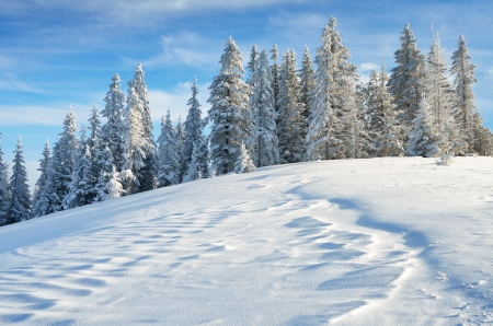 Winter landscape with fresh snow in a mountain forest
