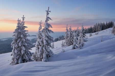 Evening Landscape with sunset sky in the winter in a mountain forest  Ukraine, Carpathian Mountains, the valley Kukul photo