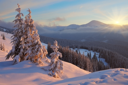 Colorful sunrise in the mountains in winter  Beautiful landscape in the morning  Carpathians, Ukraine, Europe  View of Mount Goverla