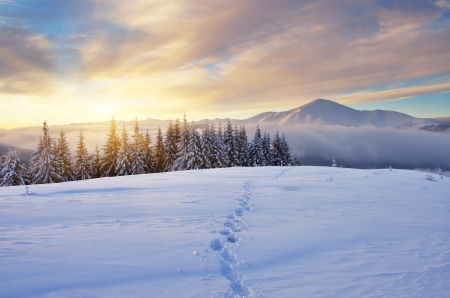 Winter landscape with sunrise in the mountains  The path in the snow  Carpathians, Ukraine, Europe