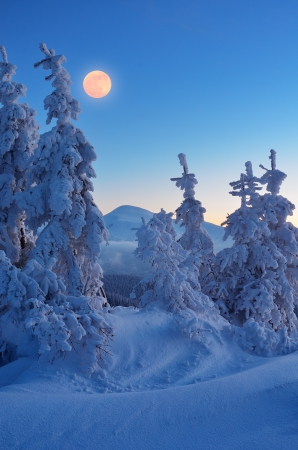 Twilight in the mountain forest  Winter landscape with a full moon photo