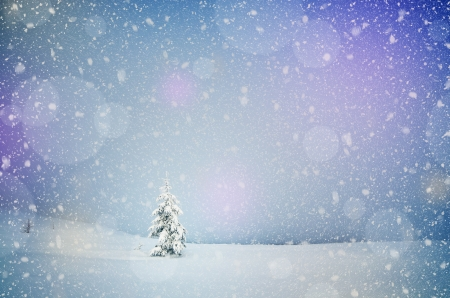 hoar frost: Winter landscape with snow-covered fir-tree in a lonely mountain valley  Christmas theme with snowfall Stock Photo