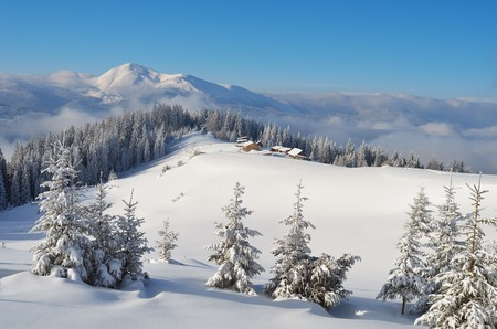 Winter landscape on a sunny afternoon with the village in a mountain valley  Carpathians, Ukraine, Europe  Fresh snow in the mountains