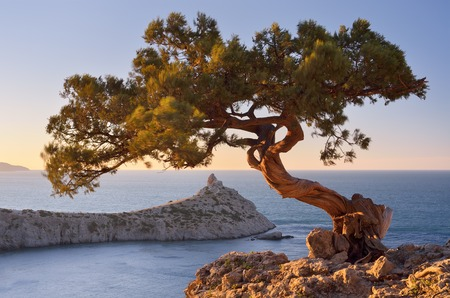 Spring landscape with a beautiful pine tree on a cliff  View from the mountains to the sea and cape  Crimea, Ukraine, Europe