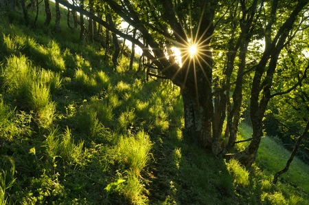 Spring landscape with lush grass and foliage in the woods  The sun rays in the trees photo