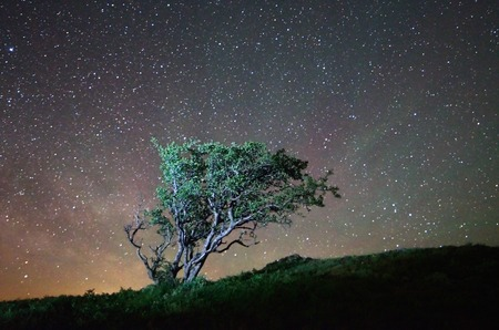 Night landscape lone tree on a background of the starry sky photo