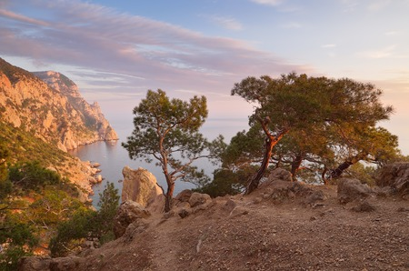 Evening landscape with beautiful sunshine  Pine forest on the rocks by the sea  Cape Aya, Crimea, Ukraine, Europe photo