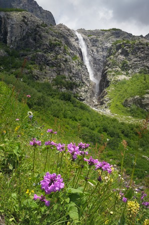 garden scenery: Beautiful flowers stachys macrantha in the mountains and a large waterfall  Sunny summer landscape  Zemo Svaneti, Georgia