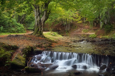 Summer landscape with a beautiful beech forest  Mountain stream with cascades  Carpathians, Ukraine, Europe photo