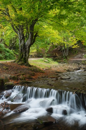 Forest landscape with river  Waterfall on a mountain river  Carpathians, Ukraine, Europe photo
