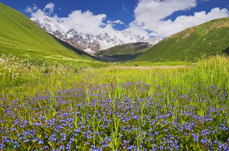 Summer landscape with a mountain valley  Sunny day  Glade blue flowers  Zemo Svaneti, Georgia, Caucasus photo