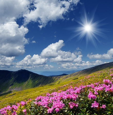 garden scenery: Mountain landscape with blossoming meadow  Pink rhododendron flowers  Stormy skies over the ridge Stock Photo