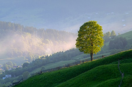 Summer landscape with a lone tree  Morning in a mountain village  Carpathian mountains, Ukraine, Europe photo