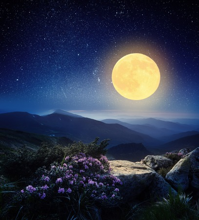 Mountain landscape at night  The light of the full moon  Rhododendron flowers in the mountains