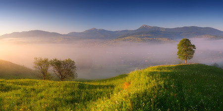 Summer panorama from the morning mist over a mountain village  The first rays of sun on a meadow with lush green grass  Carpathian mountains, Ukraine, Europe photo
