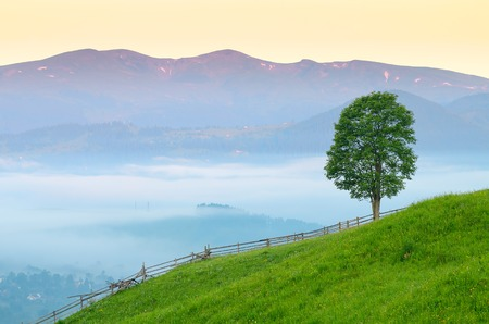 Morning in a mountain village  Rural summer landscape with a lone tree  Carpathians, Ukraine, Europe photo