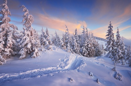 Fir trees under the snow. Mountain forest in winter. Christmas landscape. The path in the snow. Carpathian mountains, Ukraine, Europe Archivio Fotografico