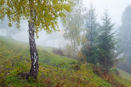 dampness: Autumn landscape with fog. Trees on the slopes of a hill in the mountain village Stock Photo